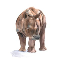 Rhinoceros PAINTING Print of watercolor by Splodgepodge on Etsy, $15.00