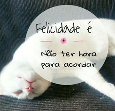 Inveja de Floki #gato #cat #pet #citacoes #frases #inspire #cute