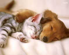 Nothing cuter than dog and cat friendships