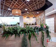 """ถูกใจ 2 คน, ความคิดเห็น 0 รายการ - Modern Garden Thailand (@moderngardenthailand) บน Instagram: """"งานตกแต่งปรับภูมิทัศน์พื้นที่ภายในOffice แบบสวนกระถาง #ต้นไม้ฟอกอากาศ 🌱 --------------------------…"""" Thailand, Garden, Modern, Shop, Plants, Garten, Trendy Tree, Gardens, Planters"""