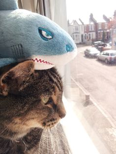 adorable Hungry Shark plush and friend