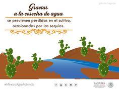 Gracias a la cosecha de agua se previenen pérdidas en el cultivo, ocasionadas por las sequías.SAGARPA SAGARPAMX #MéxicoSiembraÉxito