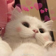Funny Cute Cats, Cute Baby Cats, Cute Cats And Dogs, Cute Kittens, Cute Funny Animals, Cats And Kittens, Cute Kawaii Animals, Cute Little Animals, Funny Cat Wallpaper
