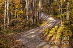 Tree Shadows. A winding dirt road with elongated shadows of surrounding trees. Fine Art Photography      http://rob-huntley.artistwebsites.com      © Rob Huntley