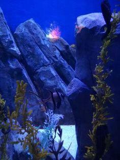 Ocean Park, Aquarium, Pets, Animals, Fish Stand, Animals And Pets, Animales, Animaux, Fish Tank