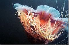 Google Image Result for http://slickzine.com/wp-content/uploads/2012/01/AlexanderSemenov-jelly-fish-photos-2_thumb.jpg