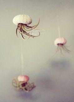 Five Jellyfish Air Plants // Sea Urchins Hanging garden Installation Wedding Favor Decor Gift Mini Terrarium Kit DIY tiny cute tillandsia $35   Look around!