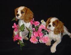 Cavalier King Charles Spaniels Girls