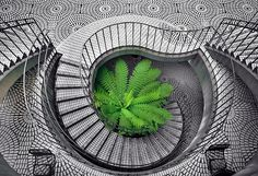 """Best Selling Architecture: 1st Place! """"Tree Fern in the Stairs"""" by artist Daniel Furon. GREAT Image!"""