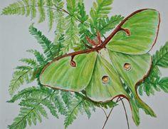 gardening with ferns | Moth On Ferns Garden Lovers Art Painting - Luna Moth On Ferns Garden ...