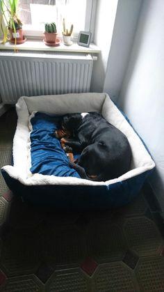 Swiss Mountain Dogs, Outdoor Furniture, Outdoor Decor, Yard Furniture
