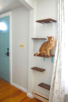 To replace our bulky cat tower, I built these colorful cat shelves for the living room.