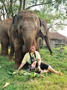 WorldWideWorker: Diana Edelman, PR and Social Media for Save Elephant Foundation, in Thailand