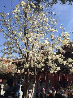 China Trip, China Travel, Christmas Tree, Holiday Decor, Xmas Tree, Xmas Trees, Christmas Trees