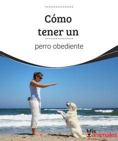 Cómo tener un perro obediente - Mis animales A continuación te vamos a dar unas reglas básicas que tienes que cumplir, si quieres tener un perro obediente.