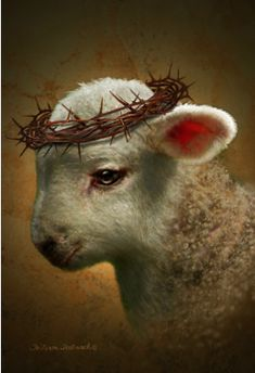 The Lamb of God. Our sweet Jesus.
