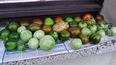 Die letzten Sonnenstrahlen genießen und dann lecker Tomatensauce daraus zaubern