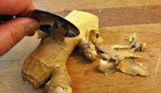 El jengibre es una planta que se encuentra originalmente en China, pero que ahora se ha extendido por todo el mundo. La raíz de la planta se utiliza comúnmente como especia. La mayoría puede asociar el jengibre con manjares dulces tales como una bebida fría de jengibre, delicadas galletas de jengibre o el pan de jengibre. En muchos países también se utiliza para fines medicinales. Durante siglos, muchas personas han podido disfrutar de los beneficios para la salud proporcionados por esta…