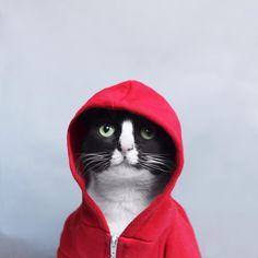 Si sólo tienes que ver un gato en internet, que sea este