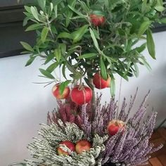 KOTI&SISUSTUS. 1.12.2016  BLOGISSA ny...JOULU Tunnelmaa myös Ulkotiloihin, PUUTARHA, PARVEKE...ITSE TEHTYÄ, UUUTTA. Minun TYYLIÄ Koti&Sisutus Sisätilat ja ulkotilat luovat Kosin Kokonaisuuden. TYKKÄÄN. NAUTIN. HYMY #koti #sisustus #puutarha #kasvit #sisustustavaraa #kanerva #kynttilä #blogi ❤☺