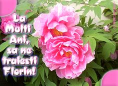 Felicitare de Florii cu mesajul La multi ani, sa ne traiesti Florin!