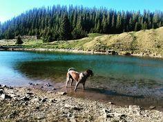 . . . . . . #cleo #doggo #huntingdog #germanwirehairedpointer #drahthaar #adventure #outdoor #travel #cleodelamunte
