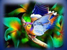 Beau bird