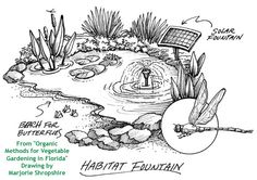 A habitat fountain attracts dragonflies, damselflies, butterflies and other predators such as frogs.