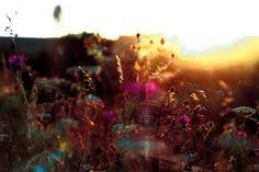 Biosphere, Tatiana Plakhova | books, paper, scissors