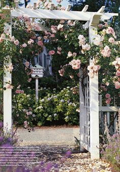 There is nothing better in summer than pink climbing roses on a white trellis.