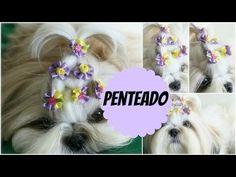 PENTEADO de PRINCESA Lindo e Fácil Cachorrinha/Cadelinha (Shih Tzu) #Ló...