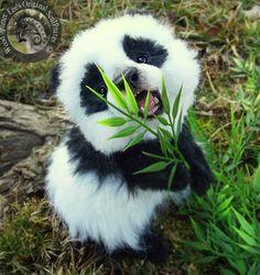 Top 10 Cutest Baby Panda Videos Uncomplicated Tutorials Images Of Cute Pandas Cute Little Animals, Cute Funny Animals, Adorable Baby Animals, Plush Animals, Animals And Pets, Animals Photos, Wild Animals, Cut Animals, Jungle Animals