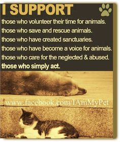 SUPPORT ANIMAL RESCUE.  If you can't rescue, please support those who do - DONATE. Adopt Spay Neuter Transport Foster until they ALL HAVE HOMES