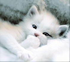 Cute Baby Kittens | http://babyboysoledad.blogspot.com