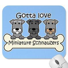 Miniature Schnauzers @Amanda Snelson Edwards  from Kyra