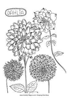 how to draw a realistic dahlia