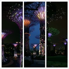 Super trees in Gardens by the Bay, Singapore