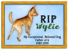 Rest in Peace Sweet Friend, Hope there's lots of other dogs to play with there... Miss you every day.