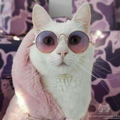 Glamour kitty