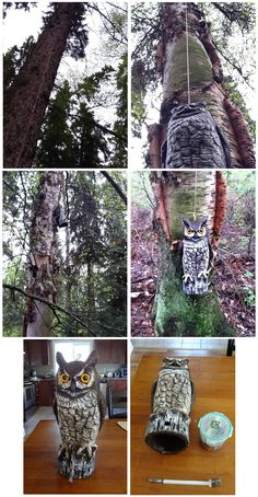 owl geocache. I actually have an owl but how do I get it up the tree?? Oh yea, I have a 6', 17 year old ladder!