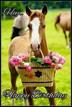 Happy birthday horse More