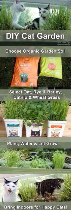 a taste of the outdoors to your indoor only cats with a DIY Cat Garden. Bring a taste of the outdoors to your indoor only cats with a DIY Cat Garden.Bring a taste of the outdoors to your indoor only cats with a DIY Cat Garden. Ideal Toys, Gatos Cats, Cat Garden, Cat Enclosure, Cat Room, Small Cat, Animal Projects, Diy Projects, Cat Health