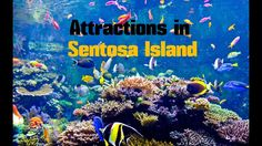 Top 14. Best Tourist Attractions in Sentosa Island - Travel Singapore - WATCH VIDEO HERE -> http://singaporeonlinetop.info/travel/top-14-best-tourist-attractions-in-sentosa-island-travel-singapore/    Top 14. Best Tourist Attractions and Beautiful places in Sentosa Island – Travel Singapore: Universal Studios Singapore, S.E.A. Aquarium, Singapore Cable Car, Sentosa Boardwalk, Sentosa Merlion, Adventure Cove Waterpark, Images of Singapore LIVE, Fort Siloso, Trick Eye Mu