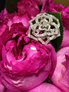 White gold and diamond #PiagetRose #ring on a bed of Yves Piaget roses #PiagetRoseDay @Piaget Huewe