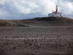 Isla Magdalena, 100.000 penguins, Chile.
