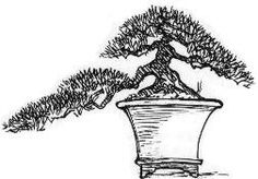 Semi cascade Bonsai style  Han-kengai  The semi-cascade style, just like the cascade style, is found in nature on cliffs and on the banks of rivers and lakes.