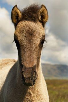 Pretty Horse Close-Up