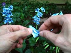 Origami Bluebell | Make-Origami.com