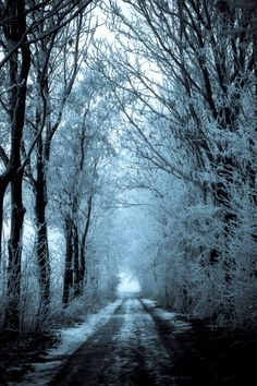 mysterious forest in winter - photo #18