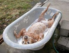 I think that guy is enjoying his bath